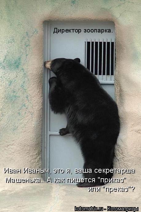 """Котоматрица: Директор зоопарка. Иван Иваныч, это я, ваша секретарша Машенька...А как пишется """"приказ"""" или """"преказ""""?"""
