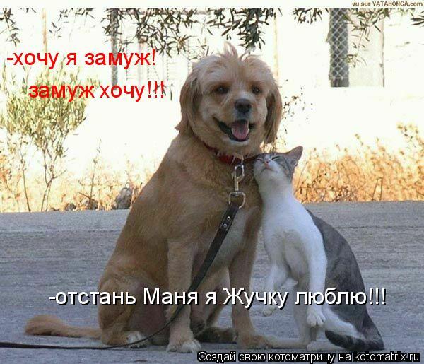 Котоматрица: замуж хочу!!! -отстань Маня я Жучку люблю!!!  -хочу я замуж!