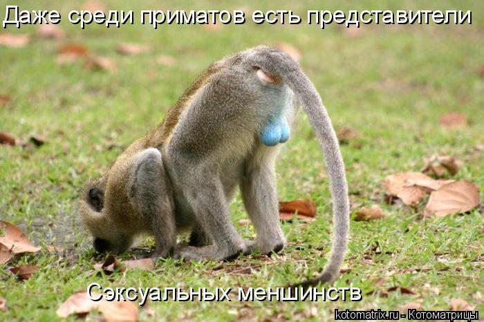 Котоматрица: Даже среди приматов есть представители Сэксуальных меншинств