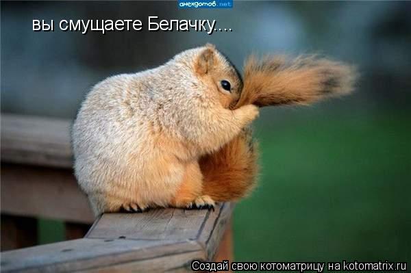 Котоматрица: вы смущаете Белачку....