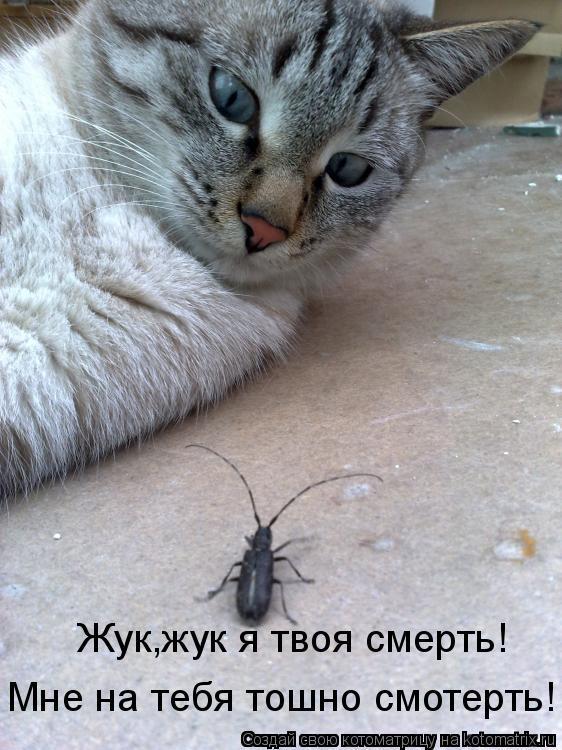 Котоматрица: Жук,жук я твоя смерть!Мне на тебя тошно смотреть!!!! Жук,жук я твоя смерть! Мне на тебя тошно смотерть!