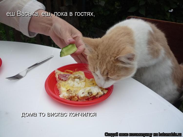 Котоматрица: еш Васька, еш, пока в гостях, дома то вискас кончился