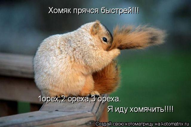 Котоматрица: Хомяк прячся быстрей!!! 1орех,2 ореха,3 ореха. Я иду хомячить!!!!