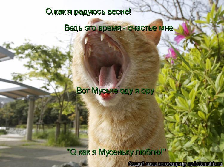 """Котоматрица: О,как я радуюсь весне! Ведь это время - счастье мне Вот Муське оду я ору """"О,как я Мусеньку люблю!"""""""