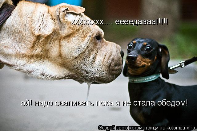 Котоматрица: хххххххх.... еееедаааа!!!!! ой! надо сваливать пока я не стала обедом!