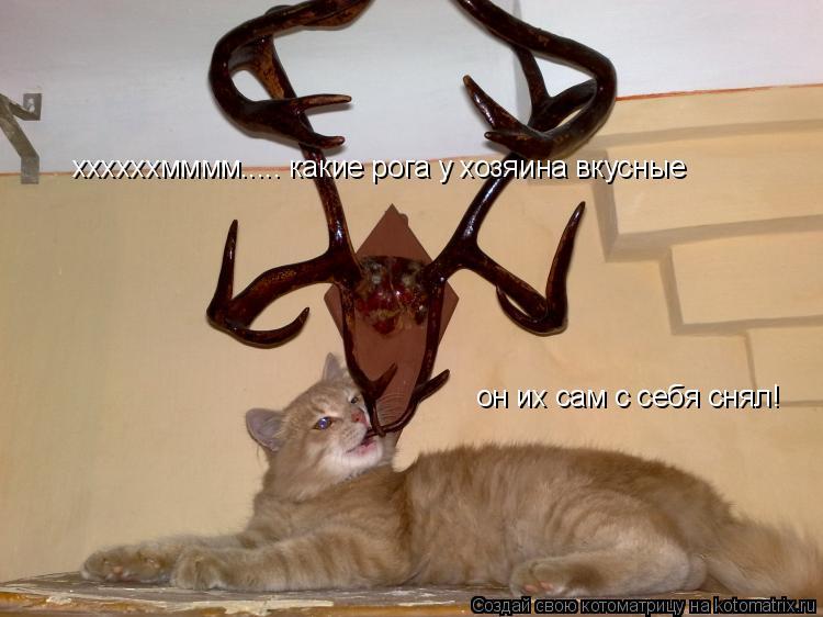 Котоматрица: ххххххмммм..... какие рога у хозяина вкусные он их сам с себя снял!