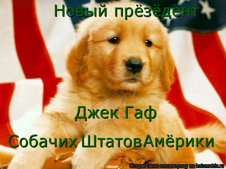 Котоматрица: Собачих Штатов Амёрики Новый прёзёдёнт  Джек Гаф