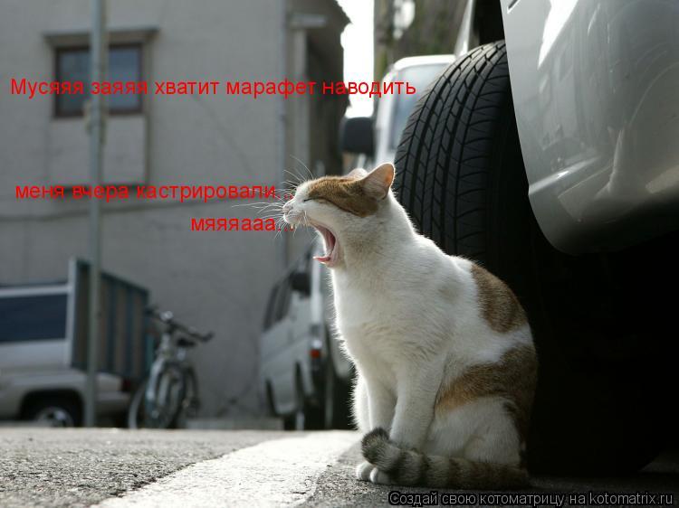 Котоматрица: Мусяяя заяяя хватит марафет наводить меня вчера кастрировали... мяяяааа...