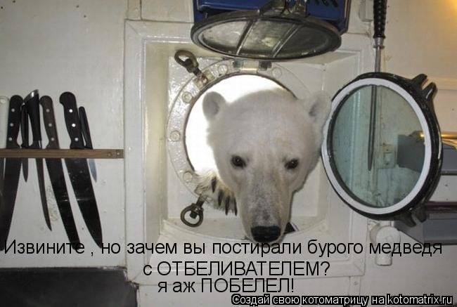 Котоматрица: Извините , но зачем вы постирали бурого медведя с ОТБЕЛИВАТЕЛЕМ? я аж ПОБЕЛЕЛ!
