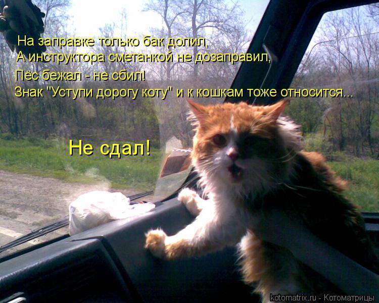 """Котоматрица: Знак """"Уступи дорогу коту"""" и к кошкам тоже относится... Пёс бежал - не сбил! А инструктора сметанкой не дозаправил, Не сдал! На заправке только б"""