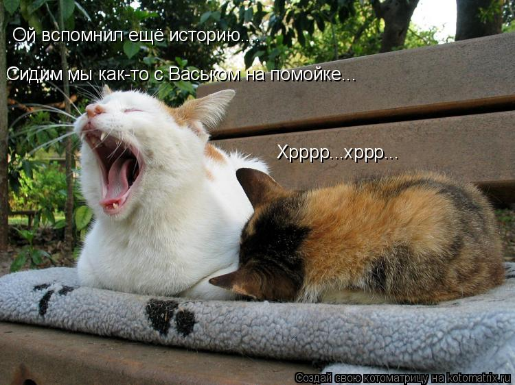 Котоматрица: Сидим мы как-то с Васьком на помойке... Ой вспомнил ещё историю.... Хрррр...хррр...