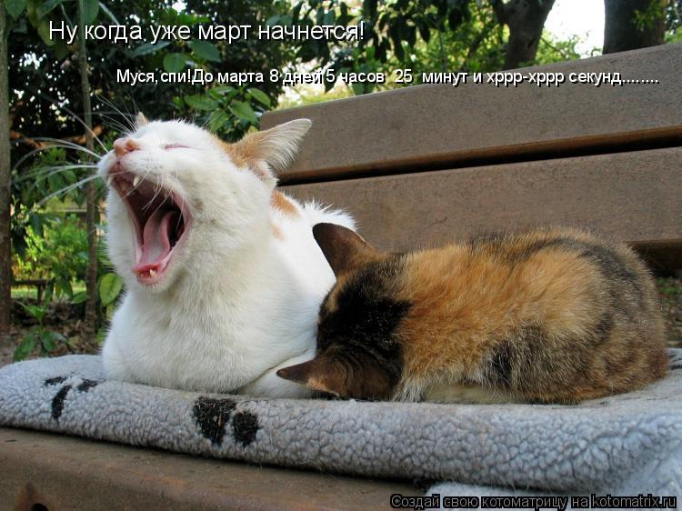 Котоматрица: Ну когда уже март начнется! Муся,спи!До марта 8 дней 5 часов  25  минут и хррр-хррр секунд........