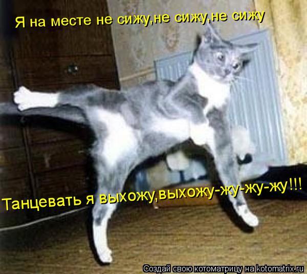 Котоматрица: Я на месте не сижу,не сижу,не сижу Танцевать я выхожу,выхожу-жу-жу-жу!!!