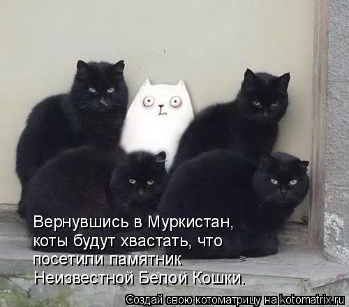 Котоматрица: Вернувшись в Муркистан,  коты будут хвастать, что посетили памятник Неизвестной Белой Кошки.