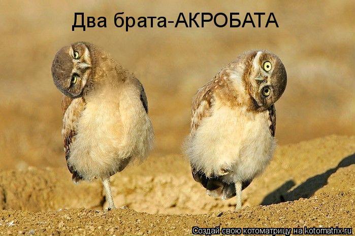Котоматрица: Два брата-АКРОБАТА