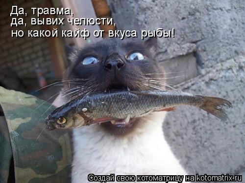 Котоматрица: Да, травма, но какой кайф от вкуса рыбы!  да, вывих челюсти,