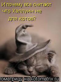 Котоматрица: И почему все считают что Хэллуин не  для котов?