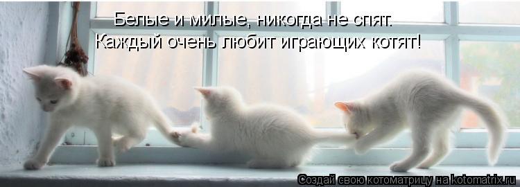 Котоматрица: Белые и милые, никогда не спят. Каждый очень любит играющих котят!