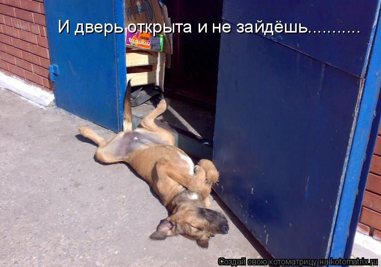Котоматрица: И дверь открыта и не зайдёшь...........