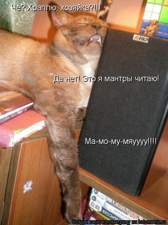 Котоматрица: Че? Храплю, хозяйка?!!!   Да нет! Это я мантры читаю! Ма-мо-му-мяуууу!!!!