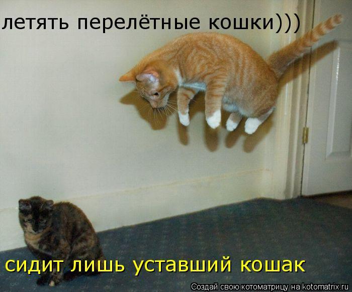 Котоматрица: летять перелётные кошки))) сидит лишь уставший кошак