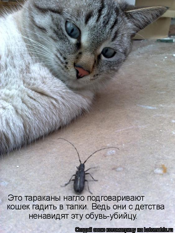 Котоматрица: Это тараканы нагло подговаривают  кошек гадить в тапки. Ведь они с детства  ненавидят эту обувь-убийцу.
