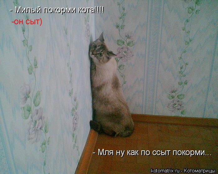 Котоматрица: - Милый покорми кота!!!! -он -он сыт) - Мля ну как по ссыт покорми...