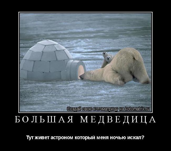 Котоматрица: Большая медведица Тут живет астроном который меня ночью искал?