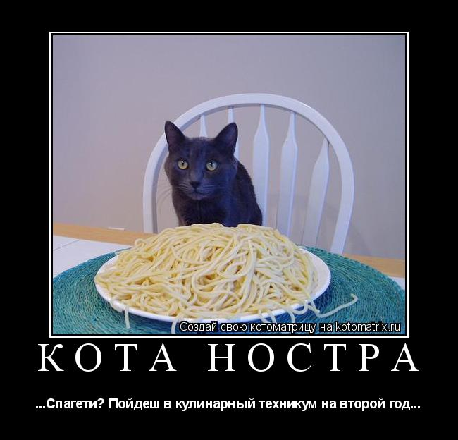 Котоматрица: КОТА НОСТРА ...Спагети? Пойдеш в кулинарный техникум на второй год...