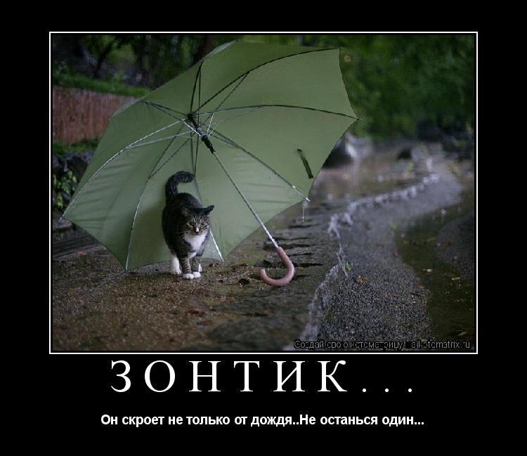 Котоматрица: Зонтик... Он скроет не только от дождя..Не останься один...