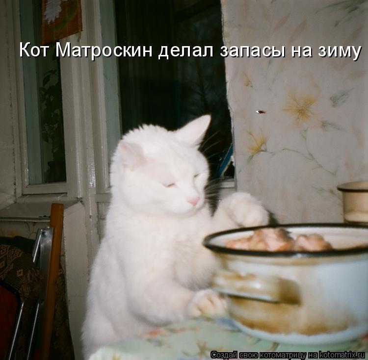 Котоматрица: Кот Матроскин делал запасы на зиму