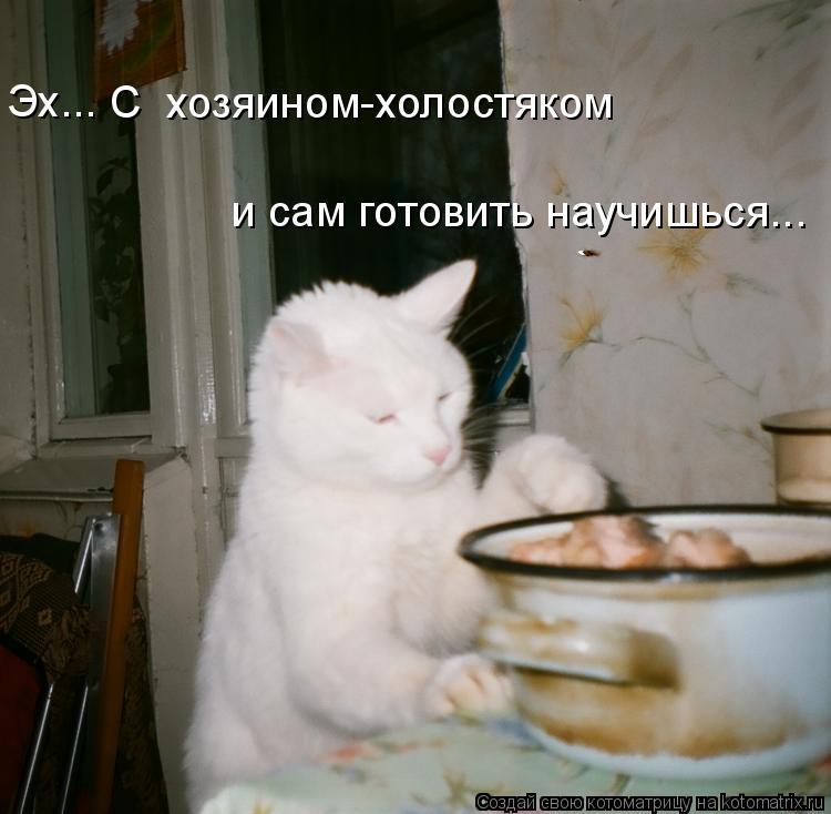 Котоматрица: С  хозяином-холостяком и сам готовить научишься... Эх...