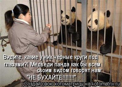 """Котоматрица: Видите, какие у них чёрные круги под  глазами?! Медведи панда как бы всем  своим видом говорят нам:  """"НЕ БУХАЙТЕ!!!!!!!!"""""""