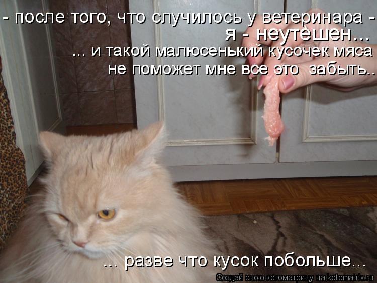 Котоматрица: ... разве что кусок побольше...  я - неутешен... - после того, что случилось у ветеринара - я неутешен... и даже такой малюсенький кусочек мяса не п
