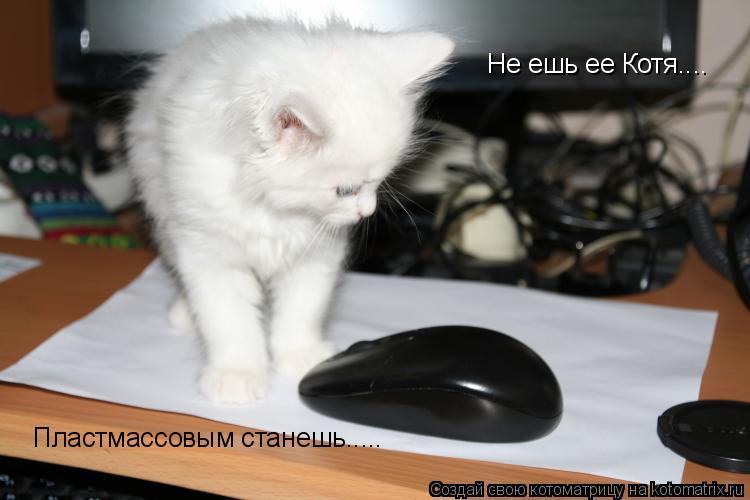 Котоматрица: Не ешь ее Котя....  Пластмассовым станешь.....