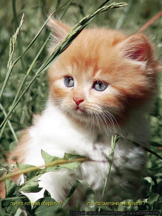 Котоматрица: по-что сметанки не купили ? по-что котенка обидели ?