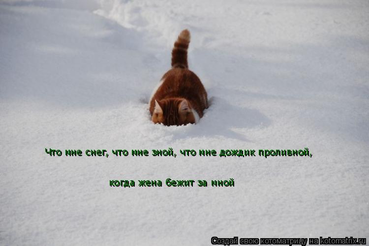 Котоматрица: Что мне снег, что мне зной, что мне дождик проливной,  когда жена бежит за мной