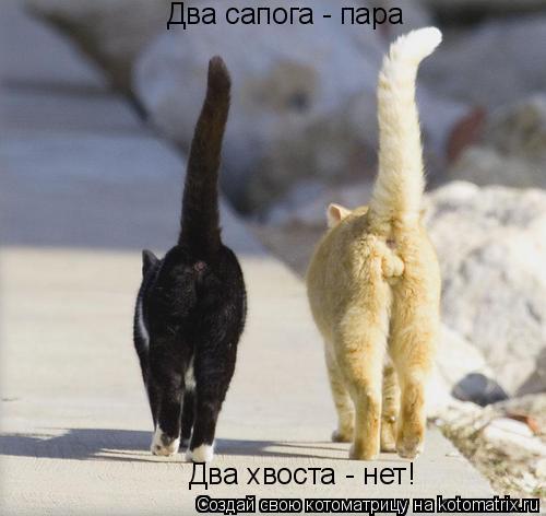 Котоматрица: Два сапога - пара Два хвоста - нет!