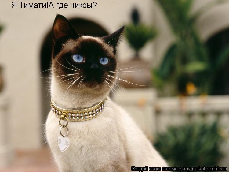 Котоматрица: Я Тимати!А где чиксы?