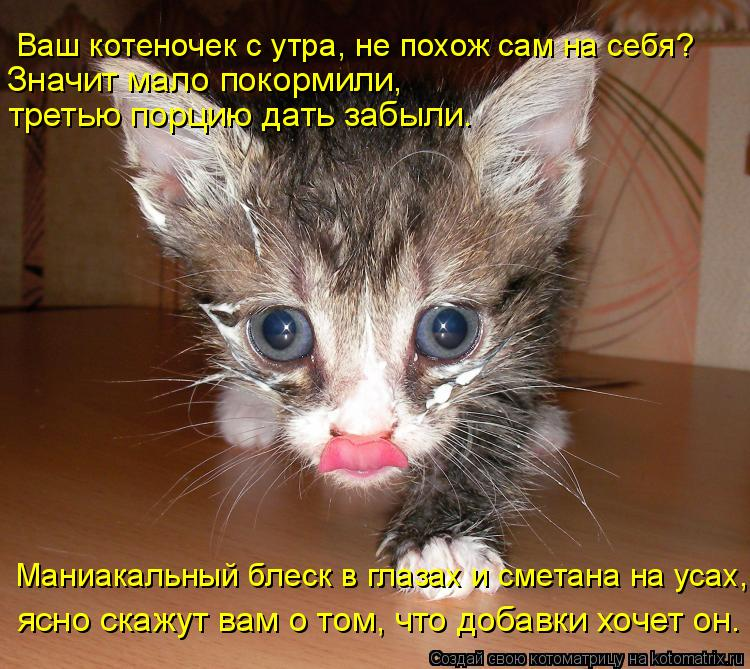 Котоматрица: Ваш котеночек с утра, не похож сам на себя?  Маниакальный блеск в глазах и сметана на усах, ясно скажут вам о том, что добавки хочет он. Значит