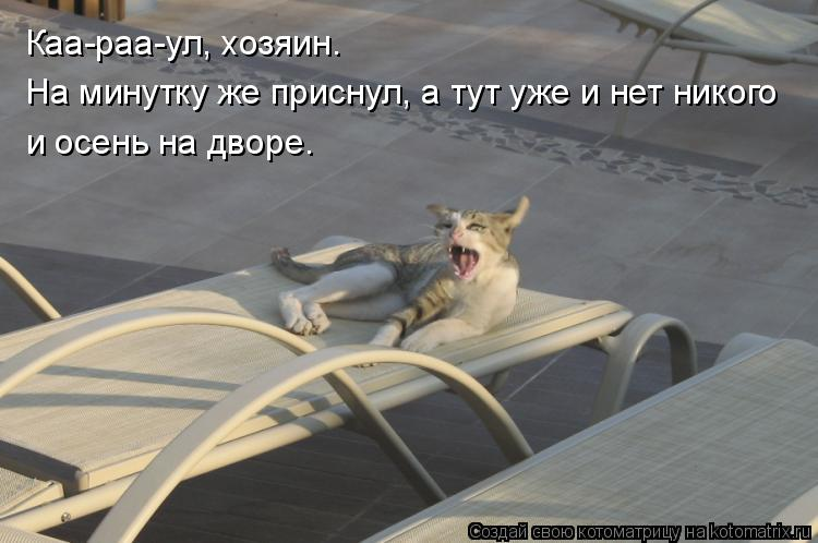 Котоматрица: На минутку же приснул, а тут уже и нет никого и осень на дворе. Каа-раа-ул, хозяин.