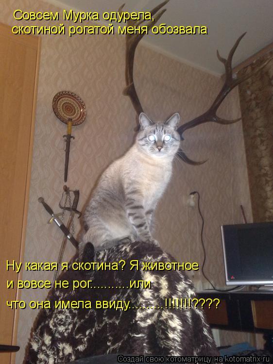Котоматрица: Совсем Мурка одурела,  скотиной рогатой меня обозвала Ну какая я скотина? Я животное и вовсе не рог...........или  что она имела ввиду..........!!!!!!