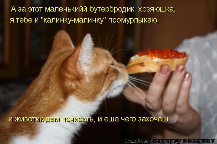 """Котоматрица: А за этот маленькийй бутербродик, хозяюшка, я тебе и """"калинку-малинку"""" промурлыкаю, и животик дам почисать, и еще чего захочеш......"""