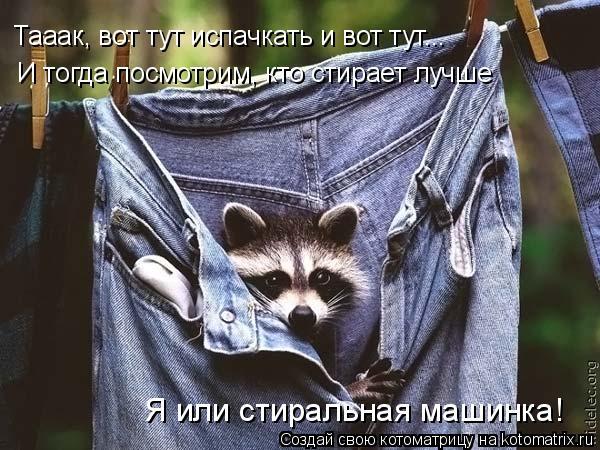 Котоматрица: Тааак, вот тут испачкать и вот тут... И тогда посмотрим, кто стирает лучше Я или стиральная машинка!