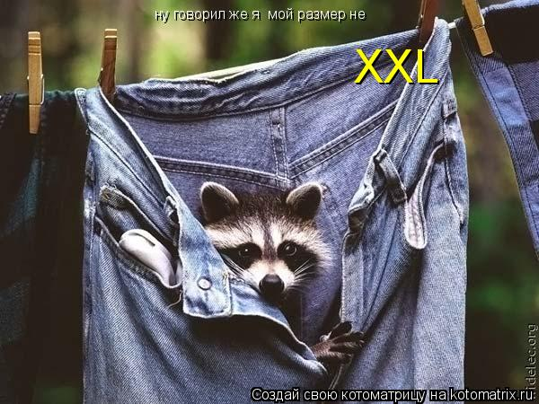 Котоматрица: ну говорил же я  мой размер не XXL