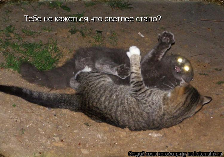 Котоматрица: Тебе не кажеться,что светлее стало?