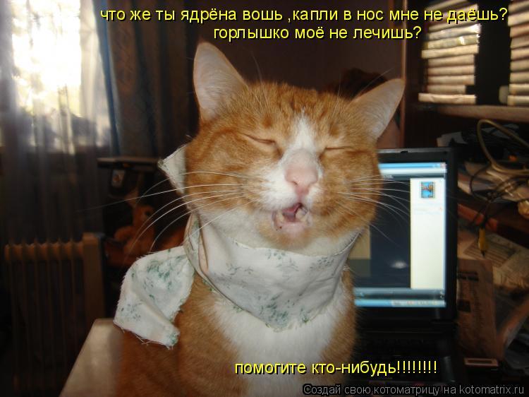 Котоматрица: что же ты ядрёна вошь ,капли в нос мне не даёшь? горлышко моё не лечишь? помогите кто-нибудь!!!!!!!!