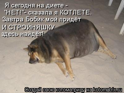 """Котоматрица: Я сегодня на диете -  """"НЕТ!""""- сказала я КОТЛЕТЕ. Завтра Бобик мой придёт И СТРОЙНЯШКУ  здесь найдёт!"""