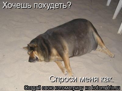 Котоматрица: Хочешь похудеть? Спроси меня как.