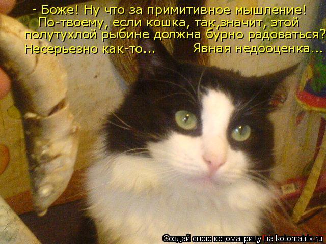Котоматрица: - Боже! Ну что за примитивное мышление! По-твоему, если кошка, так,значит, этой   полутухлой рыбине должна бурно радоваться?! Несерьезно как-то